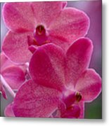 The Meaning Of Pink Metal Print
