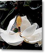 New Orleans Metamorphous Of The Southern Magnolia Spring Equinox In Louisiana Metal Print