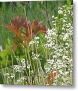 The Mighty Tiny Oak Amidst White Flowers Metal Print