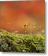 The Miniature World Of Moss  Metal Print by Anne Gilbert