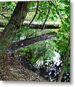 The Mirrored Tree Metal Print