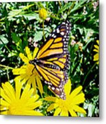 The Monarch Metal Print