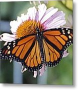 The Monarch Landed Metal Print