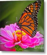 The Monarch's Flower Metal Print