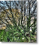 The Mossy Creatures Of The  Old Beech Forest 8 Metal Print