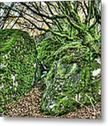 The Mossy Creatures Of The Old Beech Forest Metal Print