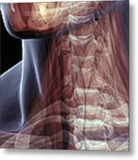 The Muscles Of The Neck Metal Print
