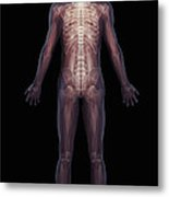 The Musculoskeletal System Rear Metal Print