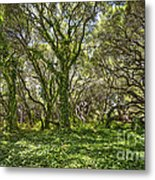 The Mysterious Forest - The Magical Trees Of The Los Osos Oak Reserve. Metal Print