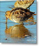 The Mythical Snipe Metal Print