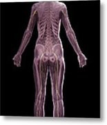 The Nervous And Skeletal Systems Female Metal Print