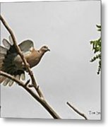 The New Dove In Town Metal Print