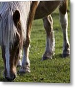 The New Forest Pony Metal Print