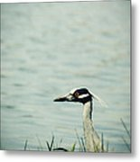 The Night Heron Metal Print