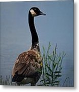 The Noble One Metal Print