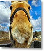 The Nose Knows Metal Print