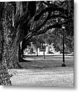 The Oaks Of Audubon Park Metal Print