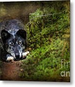 The Old And Not Too Bad Wolf Metal Print
