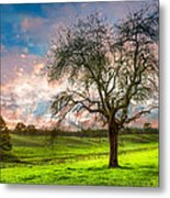 The Old Apple Tree At Dawn Metal Print