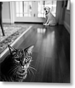 The Old Cat And The New Puppy Metal Print by Diane Diederich
