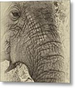 The Old Elephant Bull Metal Print