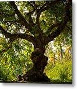The Old Mango Tree Metal Print