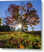 The Old Maple Metal Print