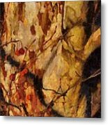 The Old Sycamore Tree Metal Print