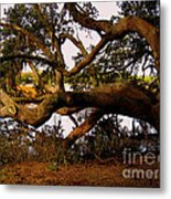 The Old Tree At The Ashley River In Charleston Metal Print by Susanne Van Hulst