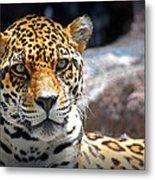The Ole Leopard Don't Change His Spots Metal Print