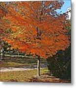 The Orange Tree Metal Print