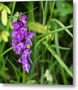 The Orchid And The Grasshopper  Metal Print
