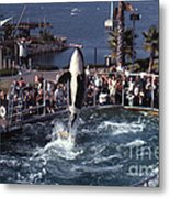 The Original Shamu Orca Sea World San Diego 1967 Metal Print