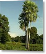 The Pantanal Metal Print