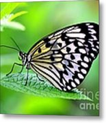 The Paper Kite Or Rice Paper Or Large Tree Nymph Butterfly Also Known As Idea Leuconoe 2 Metal Print