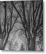 The Park In Black And White Metal Print