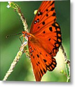 The Passion Butterfly Metal Print