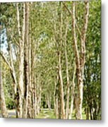 The Path Between The Trees Metal Print