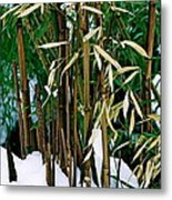 The Patience Of Bamboo Metal Print