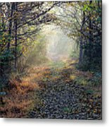The Paulinskill Trail By James Figielski Metal Print