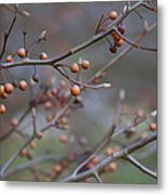 The Peaceful Fruit Of Nature Metal Print