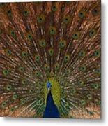The Peacock 2 Metal Print