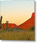 The Peak And Cardon Cacti In The Sunset In San Carlos-sonora Metal Print