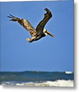 The Pelican And The Sea Metal Print