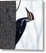 The Pilleated Woodpecker Metal Print by Rhonda Humphreys