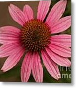The Pink Daisy Metal Print