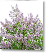 The Pink Of Spring - Featured 2 Metal Print