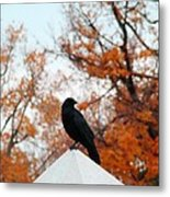 Crow Found The Perfect Pyramid Point Metal Print