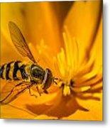 The Pollen Hunter Metal Print