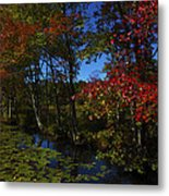 The Pond In Autumn Metal Print